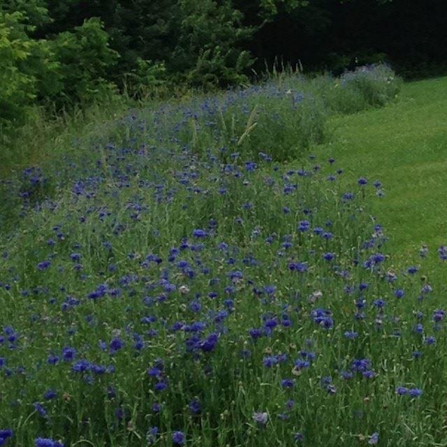 Image Result For Ballenger Creek Park Community Garden